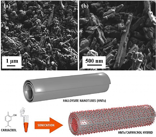 High-resolution scanning electron micrograhs of neat HNTs and a schematic illustration of halloysite nanotubes loaded with carvacrol molecules